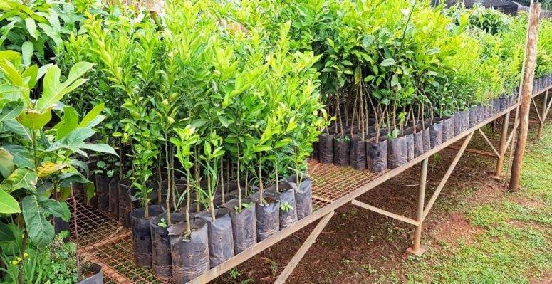 Secretaria de Agricultura divulga os critérios para doações de mudas