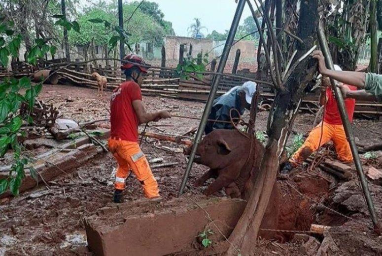 Bombeiros resgatam porca e 4 leitões que caíram em cisterna