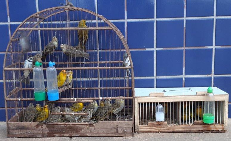 Polícia Rodoviária Federal apreende pássaros da fauna silvestre