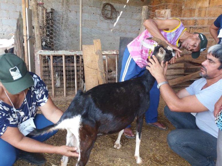De olho no mercado, produtores rurais aprendem sobre caprinos com o Senar