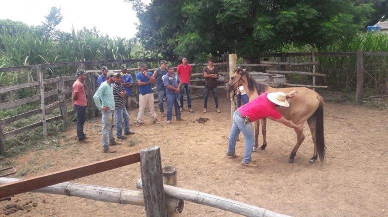 Sistema FAEMG / SENAR MINAS ensina produtores rurais a domar cavalos com amor
