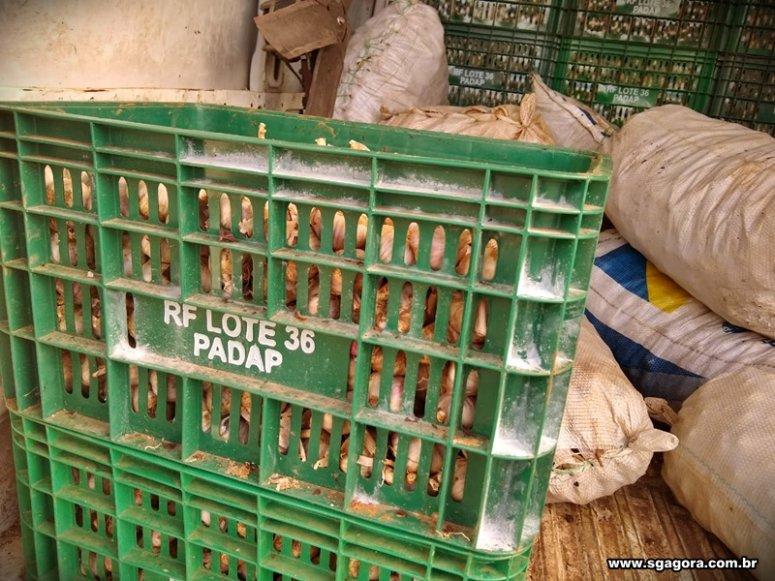 Polícia Civil de São Gotardo recupera quase 2 toneladas de alho furtado