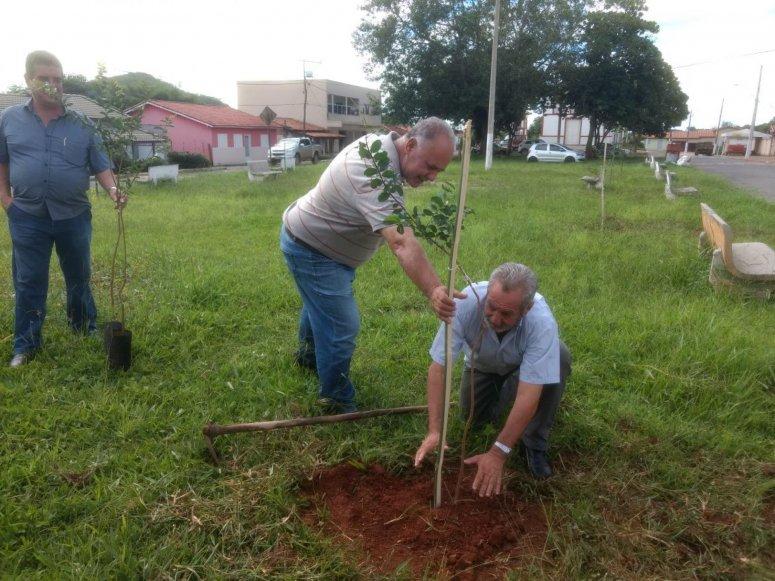 Distrito de Areado recebe plantio do Programa de Arborização da Prefeitura