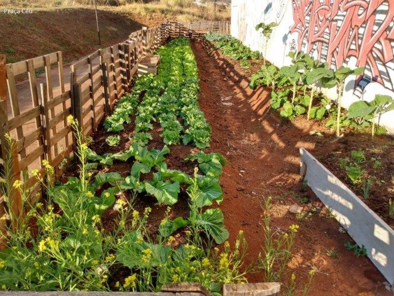 Programa Municipal de Hortas Comunitárias continua em 2020