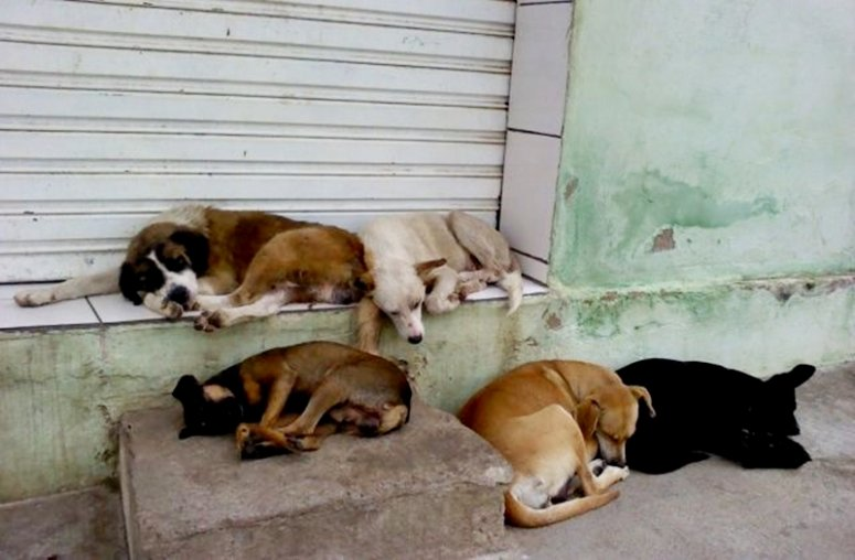 Termo de compromisso é assinado para normatizar situação de cães e gatos de rua